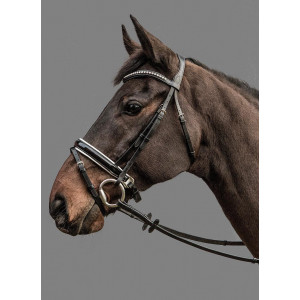 Mountain Horse Gaspari Bridle