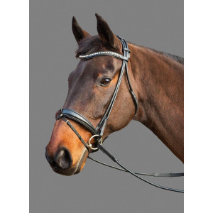 Mountain Horse Maestro Bridle